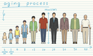 Aging Chart