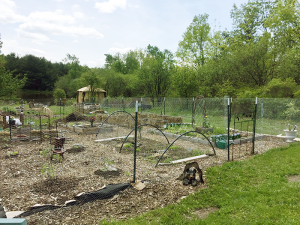 Pond-side garden at Vinny and Pam Oliveira's off-the-grid community homestead in Dundee